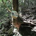Photos: 森の熊さん