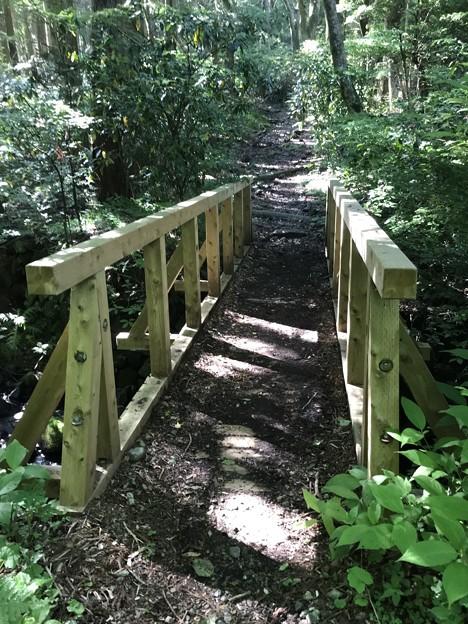 Photos: 森の架け橋