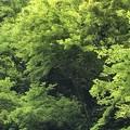 Photos: 森の営み