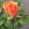 Photos: ガツンとオレンジ色