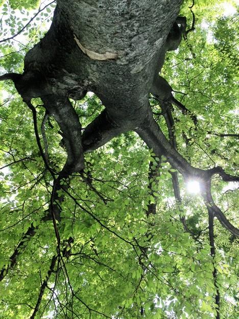 木陰でお弁当食べた。