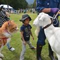 写真: 山羊さんと2ショット