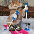 写真: スキーの練習