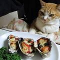 写真: 牡蠣に舌鼓