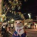 Photos: 笹の葉さ~らさら♪