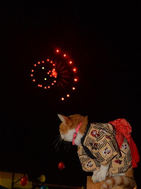 写真: ヘンテコな花火だニャ? 蛸花火?