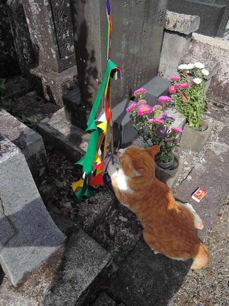 写真: 施餓鬼旗、ここで良いかニャ?