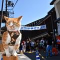 Photos: 駅伝大会