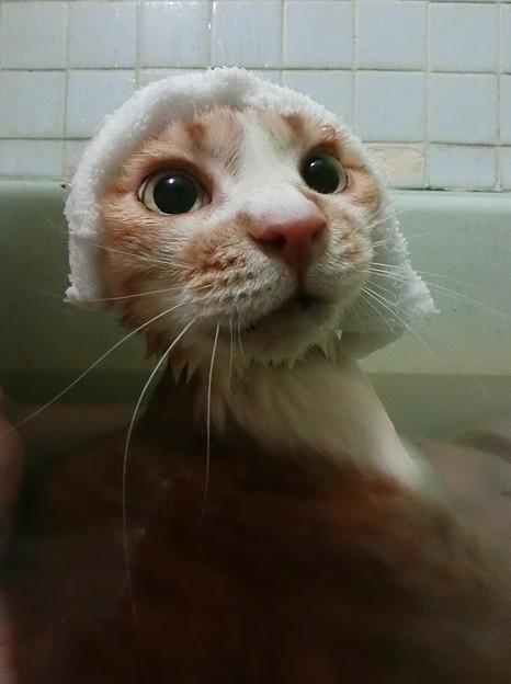 お風呂みいこ 「カワウソになあ~った わたし♪」