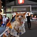 Photos: 木曽踊り始まりました。