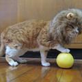 Photos: メディチライオン