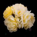薔薇-京都植物園-8887