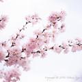 Spring-9699