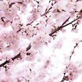 Spring-9701