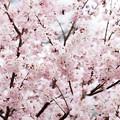 Spring-9702
