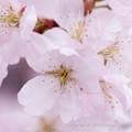 Photos: Spring-9707