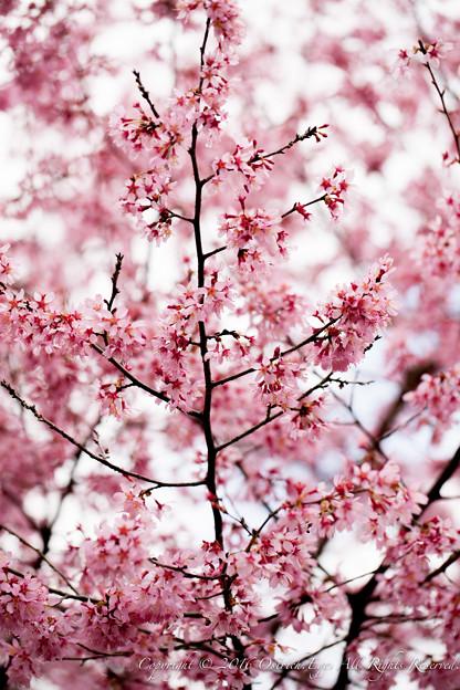Photos: Spring-9712