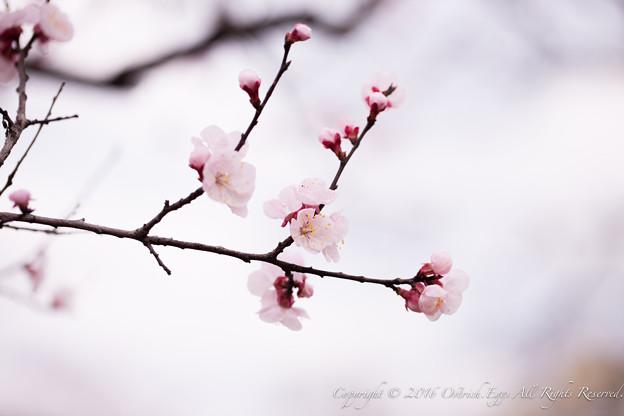 Photos: Spring-9722