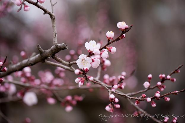 Photos: Spring-9727