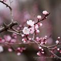 Spring-9727