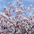 Photos: Spring-9751