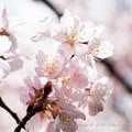 Spring-9761