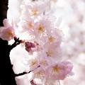 Spring-9763