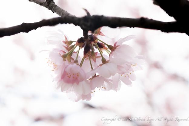 Photos: Spring-9765