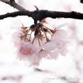 Spring-9765