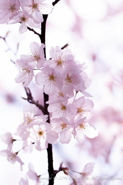Photos: Spring-9766