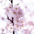 Spring-9766
