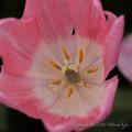 Photos: Spring-9559