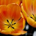 Photos: Spring-9562