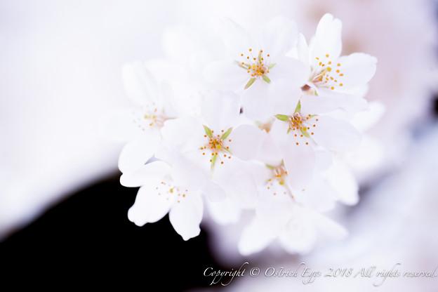 photo-4155