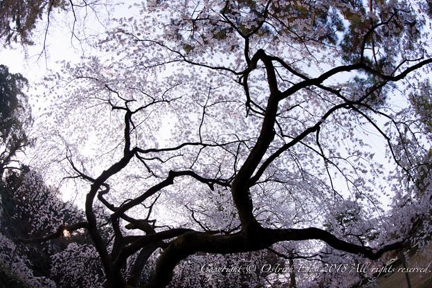 photo-4064