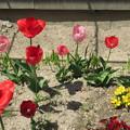 Photos: 花壇と花