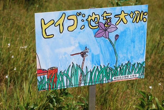 Photos: ヒイゴ池湿原