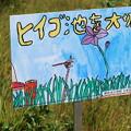 ヒイゴ池湿原