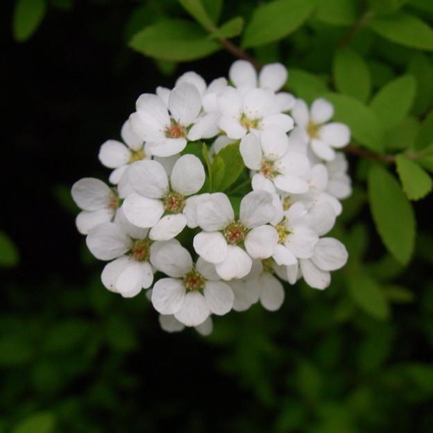 【春】春を彩るお花たち|公園にて[2016]