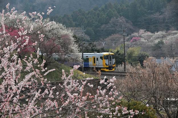 E257ホリデー快速富士山