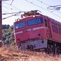 EF81406 a