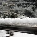 写真: 物干し竿に雪