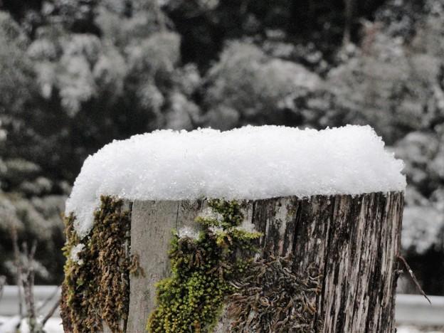 枯れ木に雪