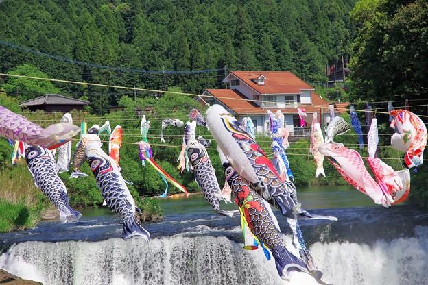 鯉の滝登り a