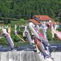 写真: 鯉の滝登り a