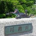 写真: センデガラッパ(川内カッパ)a
