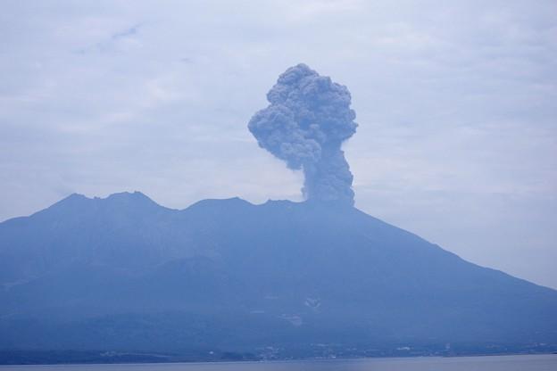 写真: 今日も噴火