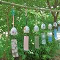 写真: 陶風鈴祭り