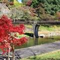 写真: 通潤橋