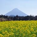 写真: 春一色